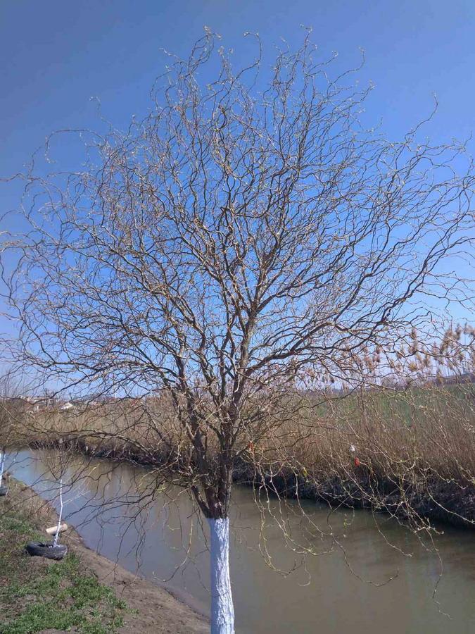 Название: Дерево у озера в Тирасполе.jpg Просмотры: 66  Размер: 270.6 Кб