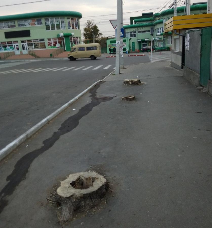 Название: Тирасполь - Деревья спилили у зеленого рынка.jpg Просмотры: 56  Размер: 193.4 Кб