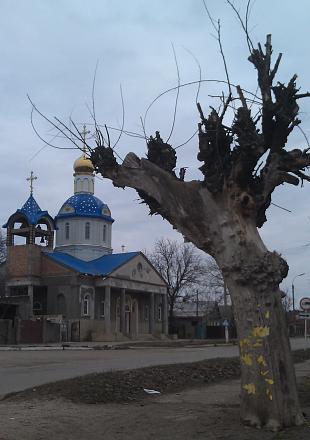 Нажмите на изображение для увеличения Название: Сухое дерево и церковь.jpg Просмотры: 391 Размер:74.8 Кб ID:17944