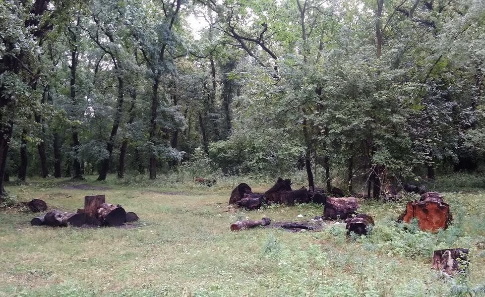 Название: Бревна в кицканском лесу.jpg Просмотры: 18  Размер: 298.8 Кб