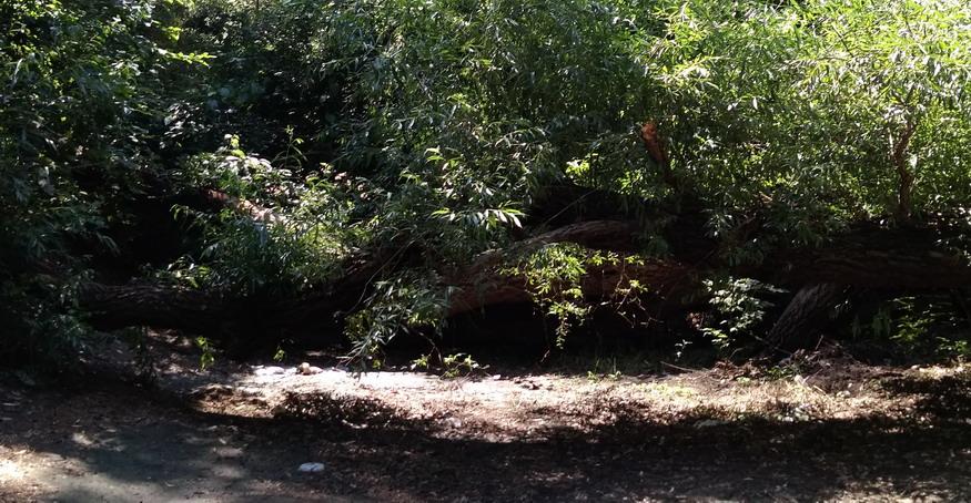 Название: Лес у парома - дерево на дороге.jpg Просмотры: 14  Размер: 199.7 Кб