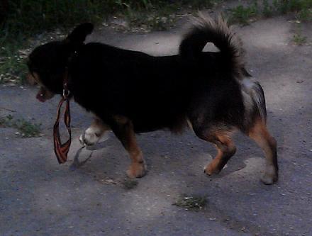 Нажмите на изображение для увеличения Название: Собака с георгиевской ленточкой.jpg Просмотры: 110 Размер:104.6 Кб ID:22054