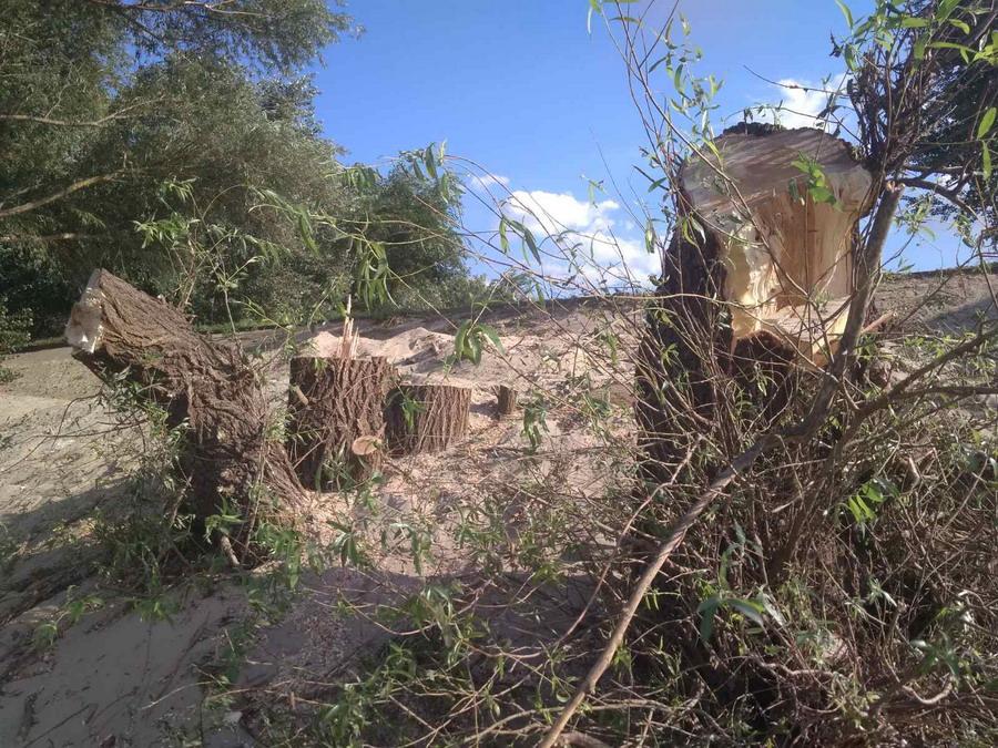 Название: Деревья на пляже Тирасполя.jpg Просмотры: 75  Размер: 287.9 Кб