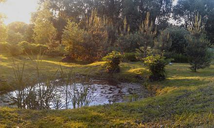 Нажмите на изображение для увеличения Название: Озеро в Подмосковье.jpg Просмотры: 247 Размер:111.4 Кб ID:22497