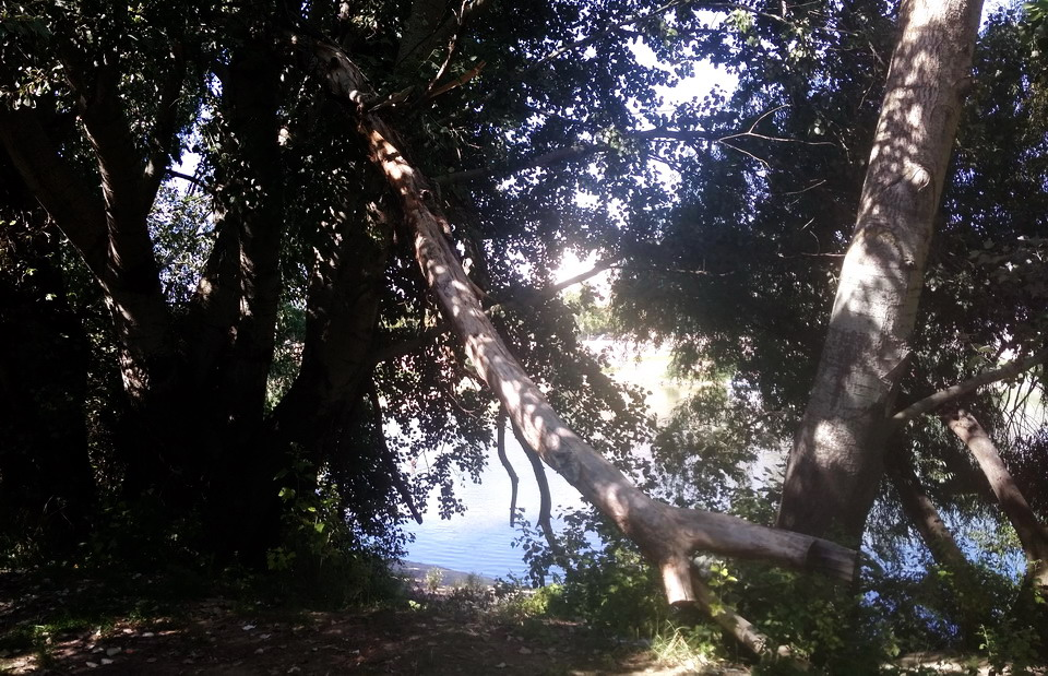 Название: Лес у Парома напротив гостиницы Аист.jpg Просмотры: 78  Размер: 262.8 Кб