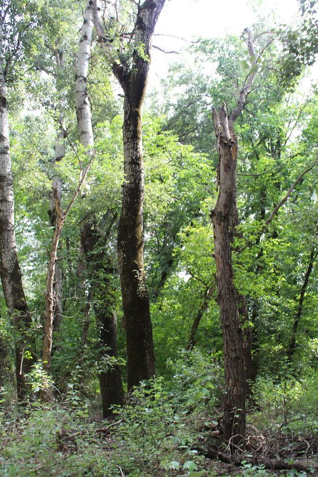 Название: Суходе дерево - Кицканский лес 2.JPG Просмотры: 67  Размер: 343.7 Кб