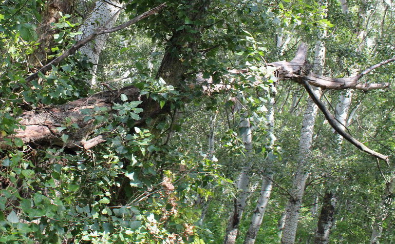 Название: Ветка опасная в лесу.JPG Просмотры: 71  Размер: 245.3 Кб
