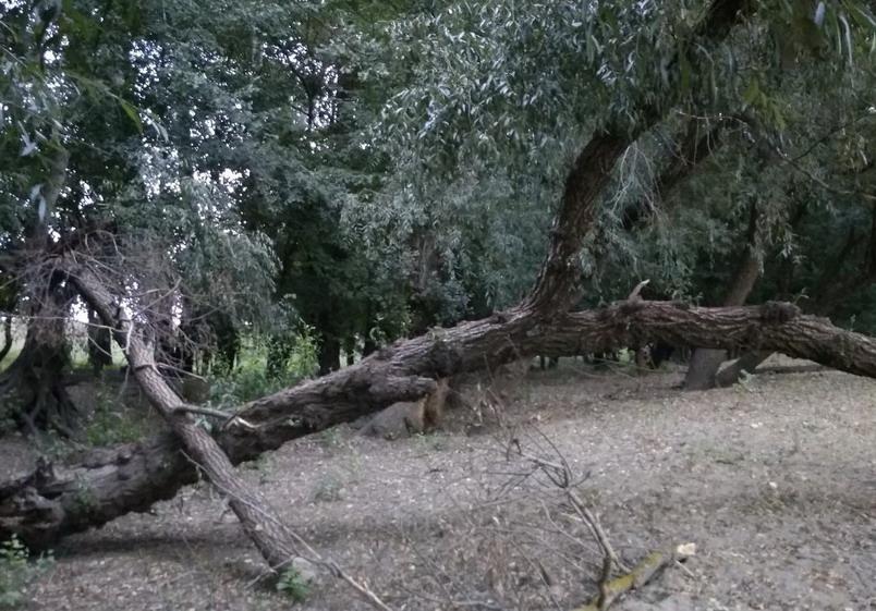 Название: Лесополоса Тирасполь Южный - ствол дерева.jpg Просмотры: 21  Размер: 167.5 Кб
