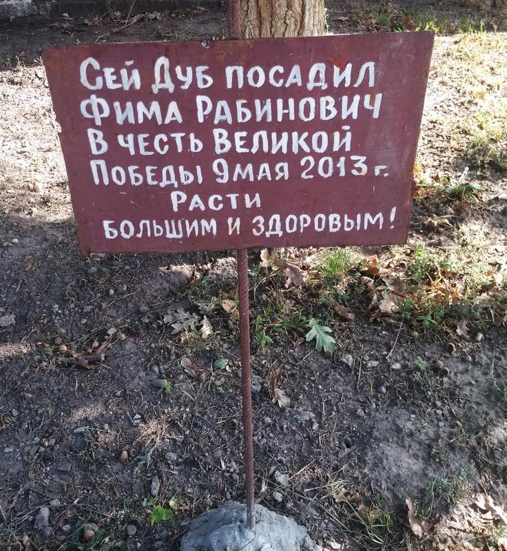 Название: Дуб Фимы Рабиновича.jpg Просмотры: 152  Размер: 311.1 Кб