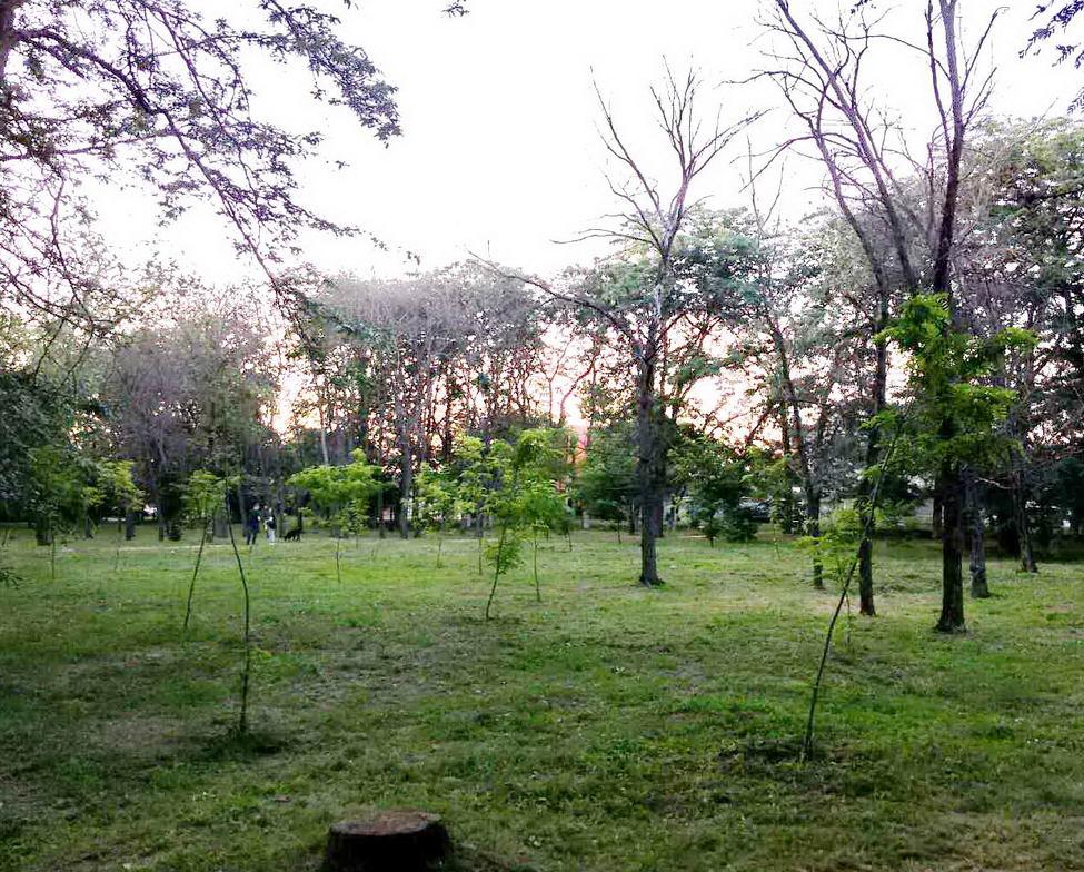 Название: Парк Победы  - сухие деревья и саженцы.jpg Просмотры: 11  Размер: 211.1 Кб