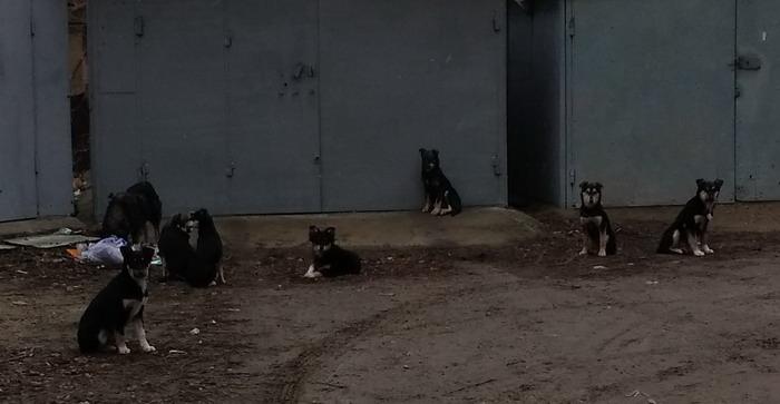 Название: Семья собак в Тирасполе.jpg Просмотры: 167  Размер: 59.2 Кб