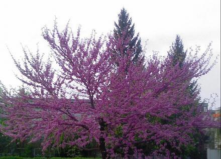 Нажмите на изображение для увеличения Название: Весна в Тирасполе.jpg Просмотры: 205 Размер:86.0 Кб ID:13440