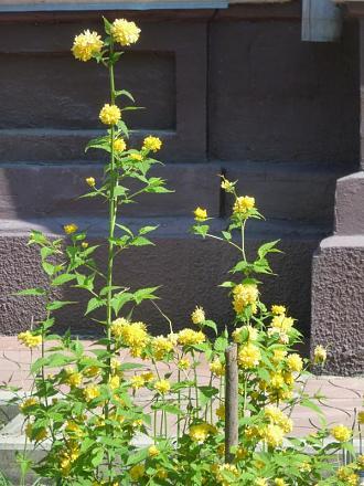 Нажмите на изображение для увеличения Название: Цветы в Бендерах на набережной.jpg Просмотры: 193 Размер:88.1 Кб ID:18986