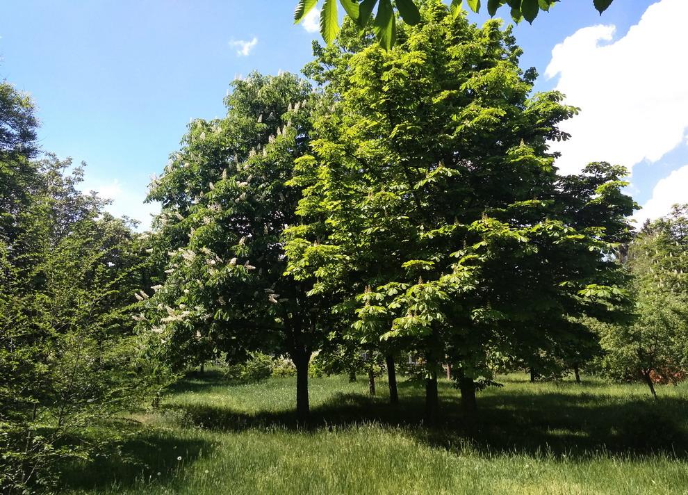 Название: Деревья на бендерской набеержной.jpg Просмотры: 28  Размер: 352.5 Кб