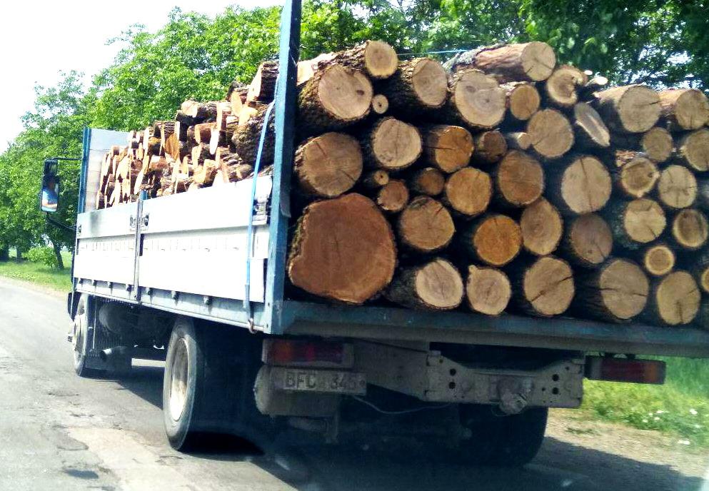 Название: Грузовик ПМР спиленные деревья.jpg Просмотры: 40  Размер: 217.8 Кб
