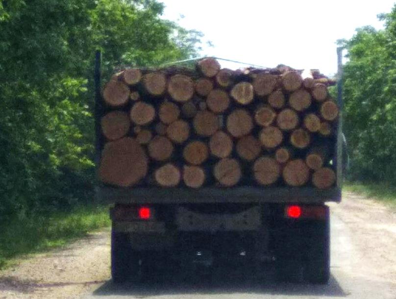 Название: Грузовик с деревьями.jpg Просмотры: 39  Размер: 101.3 Кб