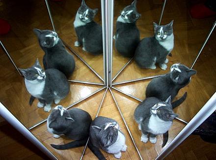 Нажмите на изображение для увеличения Название: Сколько кошек на картинке.jpg Просмотры: 1112 Размер:69.0 Кб ID:11365