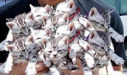 Нажмите на изображение для увеличения Название: Сколько кошек.jpg Просмотры: 288 Размер:65.0 Кб ID:11368