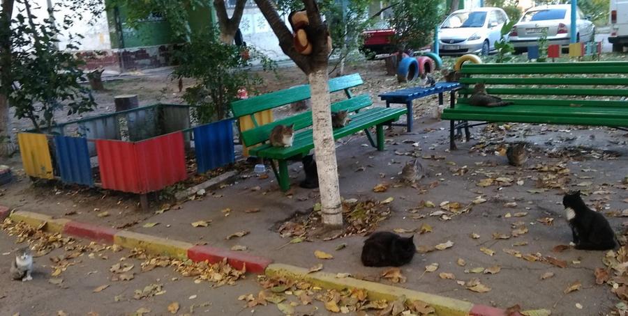 Название: Сколько кошек на фото.jpg Просмотры: 91  Размер: 162.9 Кб