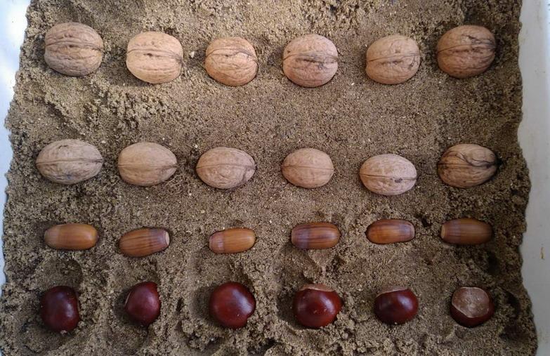 Название: Сажаем орехи, желуди, каштаны.jpg Просмотры: 51  Размер: 184.5 Кб