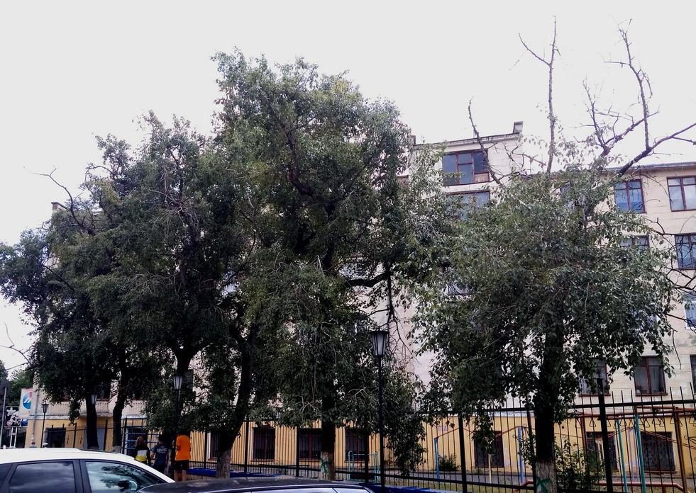 Название: Деревья у 7 школы.jpg Просмотры: 842  Размер: 304.4 Кб
