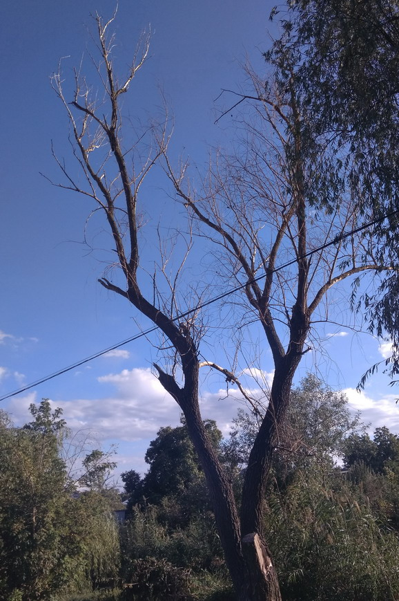 Название: Сухое дерево у лиманного ручья.jpg Просмотры: 493  Размер: 211.0 Кб
