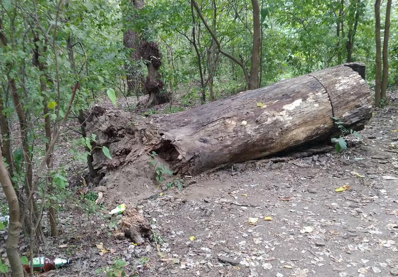 Название: Кицканский лес 2018.jpg Просмотры: 95  Размер: 270.0 Кб