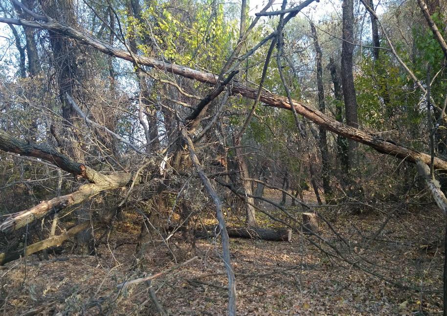 Название: Пенек в лесу.jpg Просмотры: 2252  Размер: 353.3 Кб