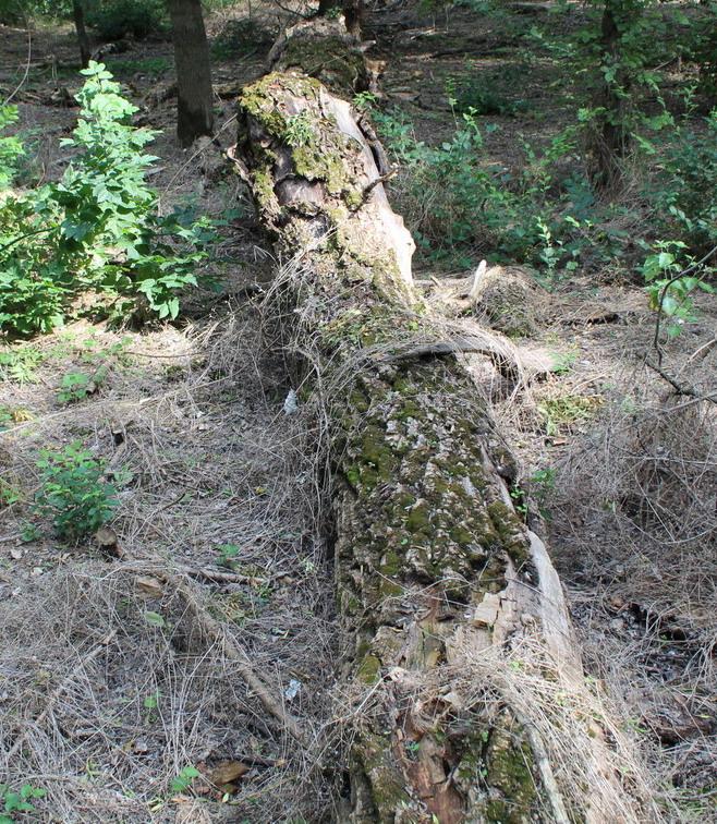 Название: Лес после санитарной рубки.JPG Просмотры: 1483  Размер: 318.1 Кб