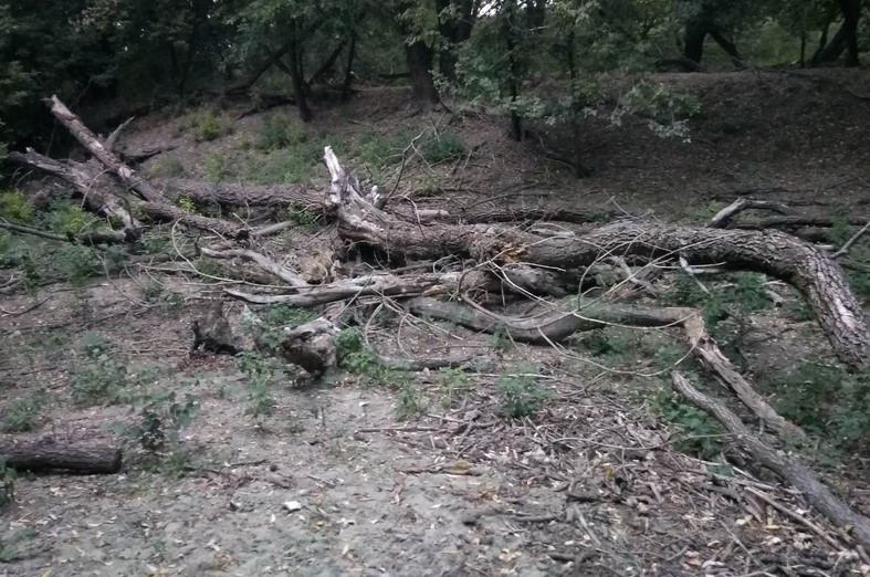 Название: Лесополоса Тирасполь Южный - ветки деревьев.jpg Просмотры: 125  Размер: 170.8 Кб