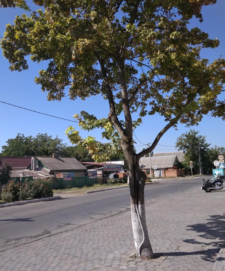 Название: Деревья в асфальте.jpg Просмотры: 284  Размер: 310.3 Кб