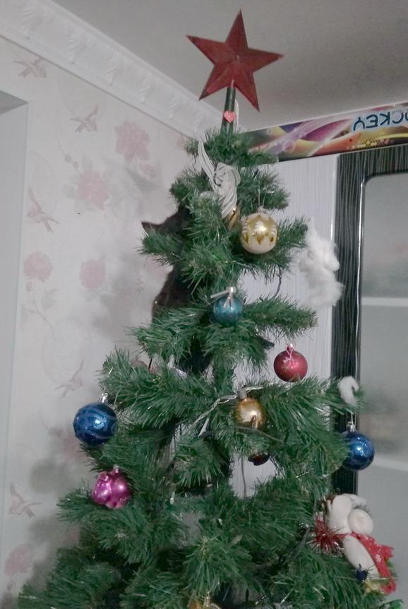 Название: Кошка на елке.jpg Просмотры: 13  Размер: 136.1 Кб