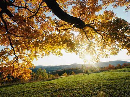 Нажмите на изображение для увеличения Название: autumn_leaves.jpg Просмотры: 355 Размер:88.4 Кб ID:7207