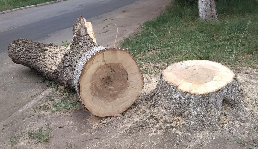 Название: Дерево по Христофорова.jpg Просмотры: 231  Размер: 194.2 Кб