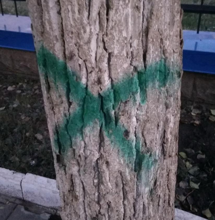 Название: Зеленый крест на дереве.jpg Просмотры: 255  Размер: 185.2 Кб
