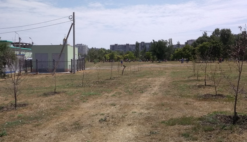 Название: Саженцы на площади Тирасполя.jpg Просмотры: 297  Размер: 157.8 Кб