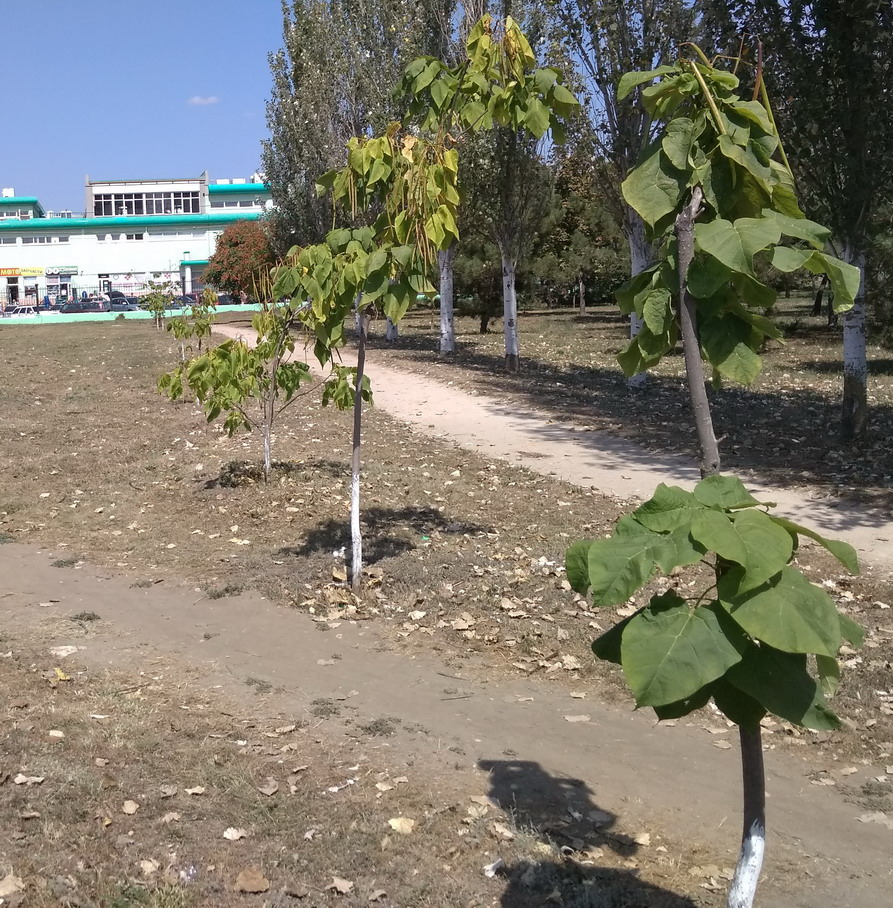 Название: Приднестровье. Центральный парк..jpg Просмотры: 310  Размер: 360.9 Кб