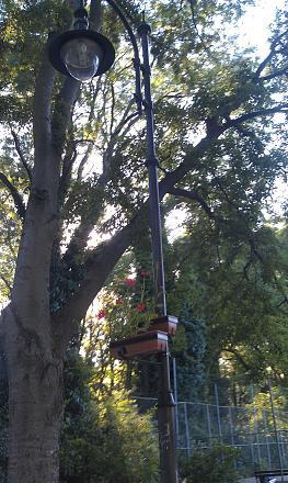 Нажмите на изображение для увеличения Название: Приморский парк - цветы на фонарях.jpg Просмотры: 103 Размер:136.5 Кб ID:19097