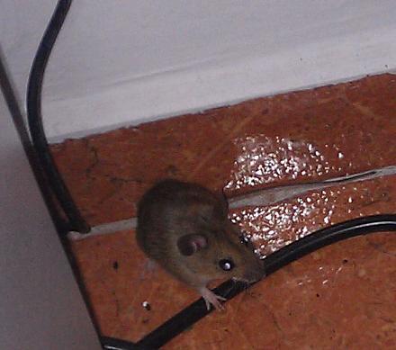 Нажмите на изображение для увеличения Название: Отель Pliska в Болгарии - служебная мышка.jpg Просмотры: 95 Размер:76.9 Кб ID:19133