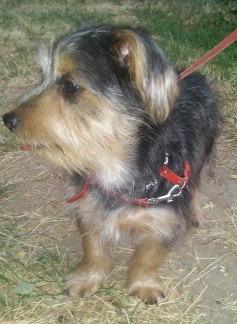Название: Пропавшая собачка в Тирасполе.jpg Просмотры: 271  Размер: 33.7 Кб