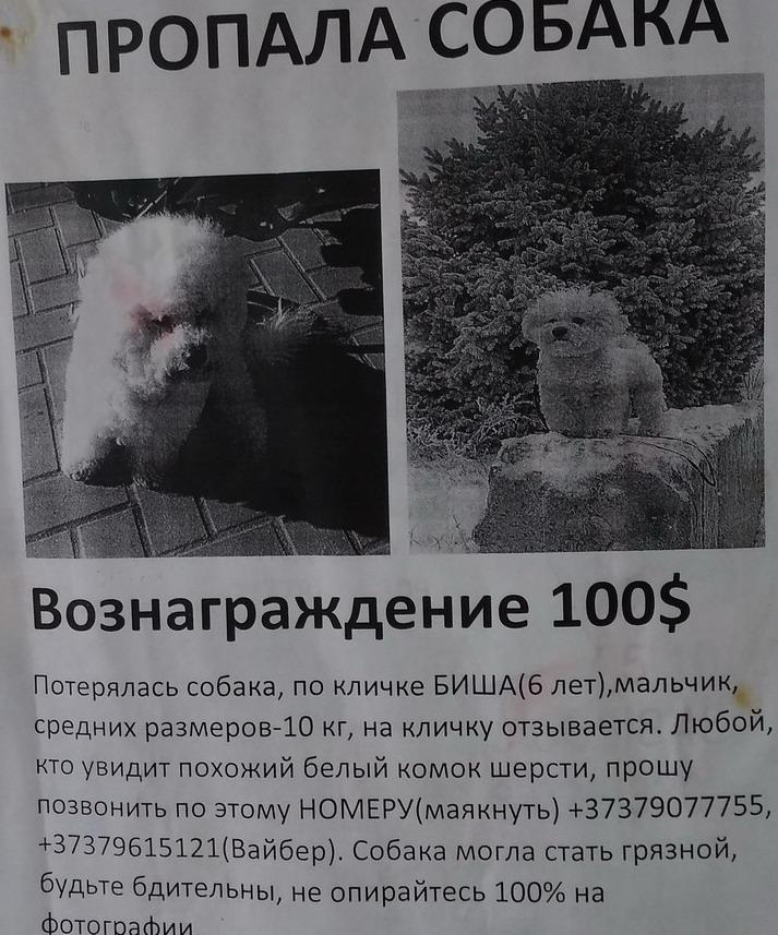 Название: Пропала собака - 100$.jpg Просмотры: 177  Размер: 204.6 Кб