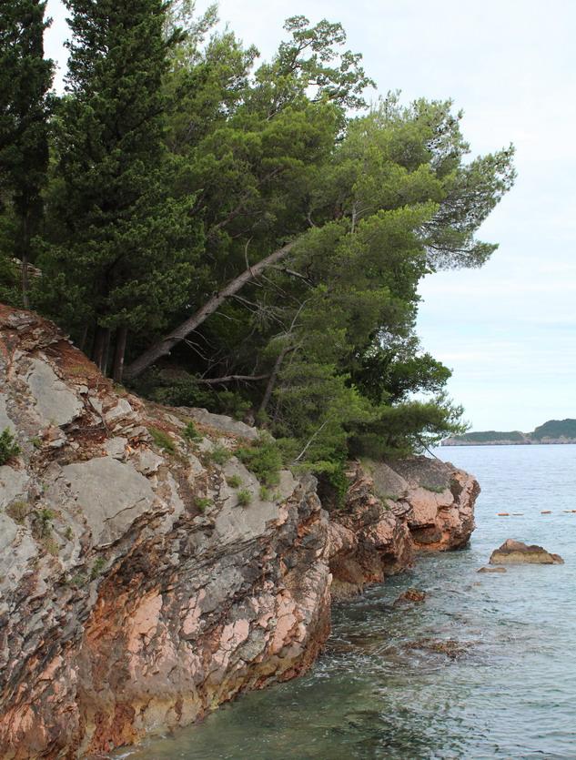 Название: Сосновые над морем.JPG Просмотры: 202  Размер: 236.5 Кб