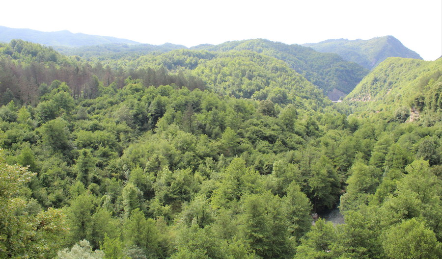 Название: Леса в Черногории.JPG Просмотры: 61  Размер: 208.3 Кб