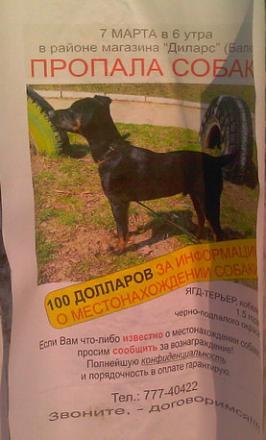 Нажмите на изображение для увеличения Название: Пропала собака.jpg Просмотры: 698 Размер:46.6 Кб ID:8775