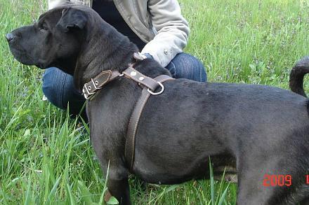 Нажмите на изображение для увеличения Название: Пропала собака.jpeg Просмотры: 428 Размер:80.9 Кб ID:9164
