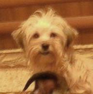 Название: Поиск собаки.jpg Просмотры: 967  Размер: 10.7 Кб