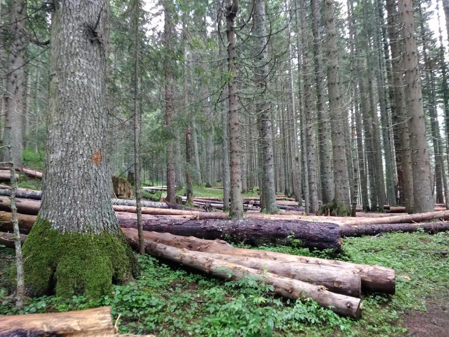 Название: Лес у Чёрного озера.jpg Просмотры: 488  Размер: 300.1 Кб