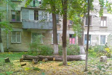 Нажмите на изображение для увеличения Название: Вырубка деревьев в Тирасполе. Фото..jpg Просмотры: 539 Размер:91.0 Кб ID:12646