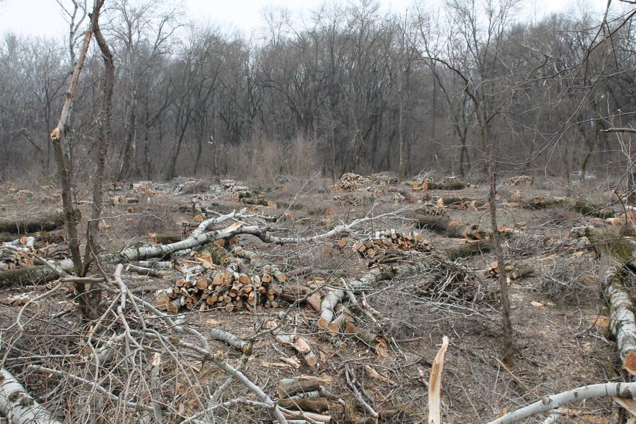 Название: 9 - панорама вырубленных деревьев в Терновке.JPG Просмотры: 200  Размер: 288.0 Кб