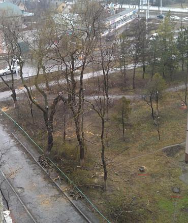 Нажмите на изображение для увеличения Название: Обрезка деревьев в Бендерах.jpg Просмотры: 516 Размер:100.9 Кб ID:15591